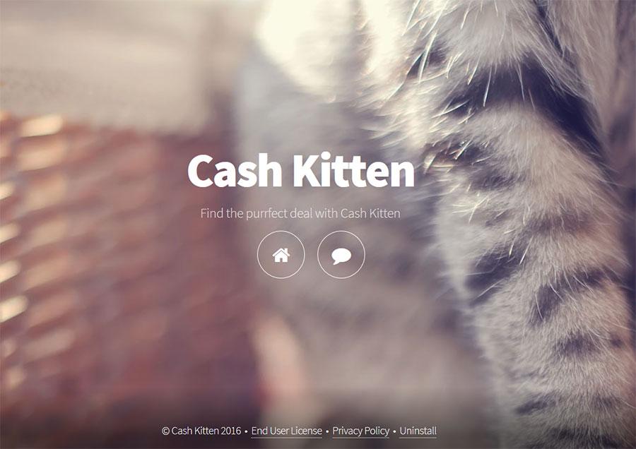 Cash-Kitten